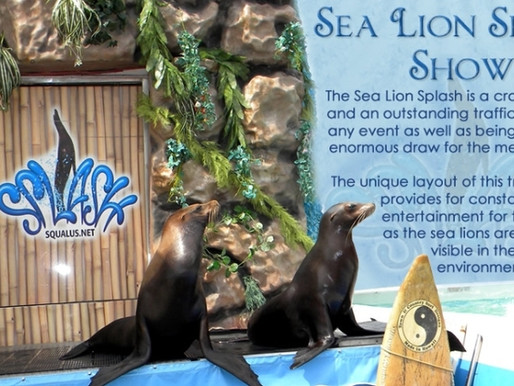 Sea Lion Splash cited for six violations of the Animal Welfare Act