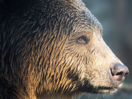 On this day two years ago Katya the brown bear was released from jail