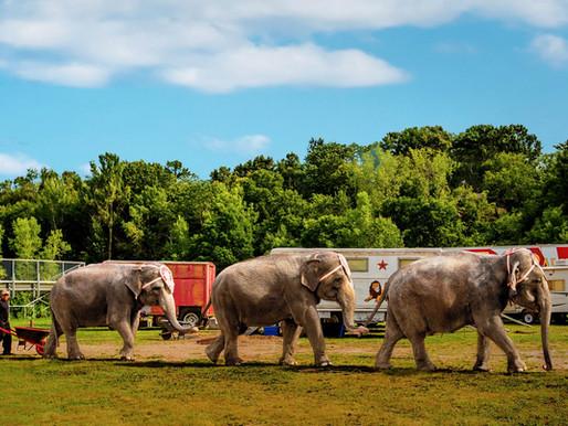 Meet the aging, arthritic elephants exploited at Circus World Baraboo