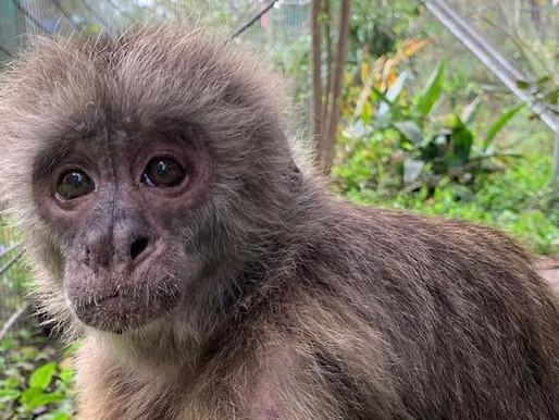 Feds inspect Jungle Friends Primate Sanctuary