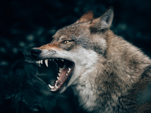 Worker attacked by wolves at North Carolina facility previously involved in a fatal lion attack