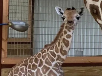 Texas Safari Ranch violates federal law; join us in reporting them