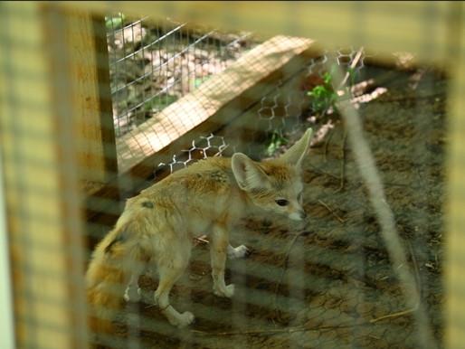 354 exotic animals awarded to city; Oklahoma veterinarian ordered to pay 95K