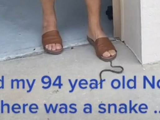 TikTok promotes violence against animals with video of a woman stomping on a live snake