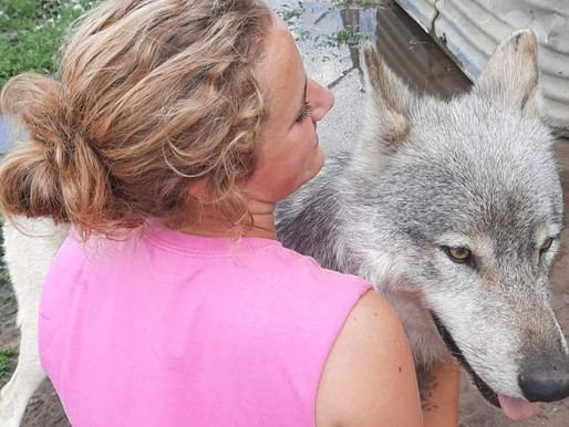 Feds cite Wildlife Science Center for three wolves that escaped and died