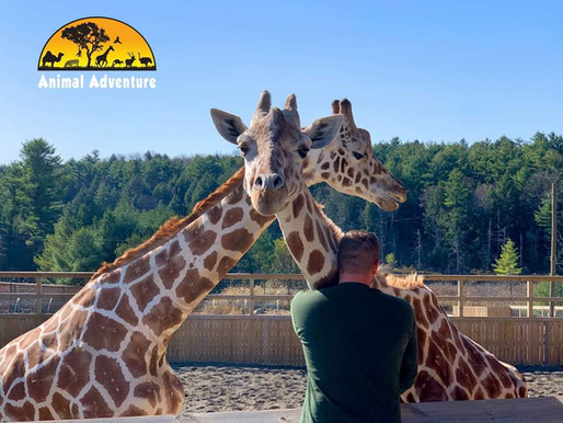 Animal Adventure Park bought animals from Special Memories Zoo the day after fire kills 35 animals