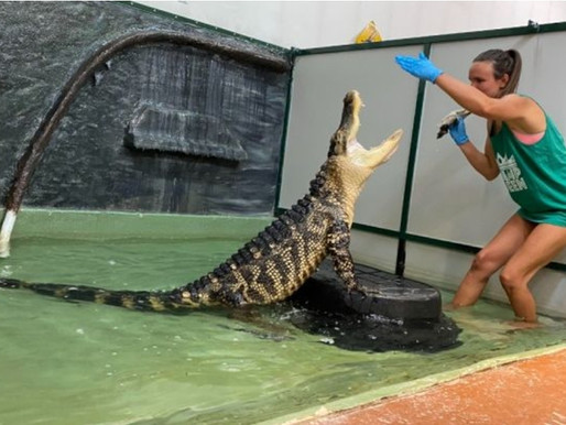 Roadside zoo; alligator attack victim start GoFundMe to profit off of viral attack