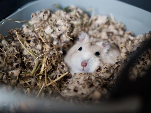 Animals cannibalized, some eaten alive at Petco/PetSmart wholesaler Sun Pet Ltd.