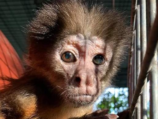 Jungle Friends Primate Sanctuary suspended by GFAS