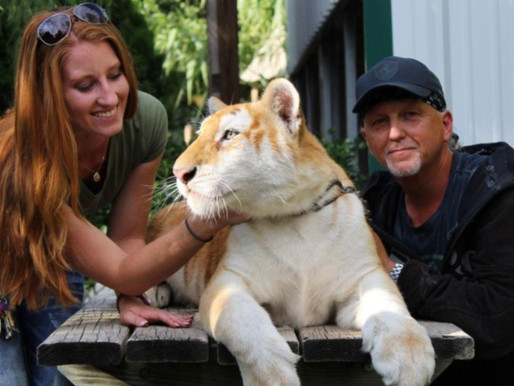 Jeff and Lauren Lowe agree to turn over 61 animals remaining at Tiger King Park to the DOJ