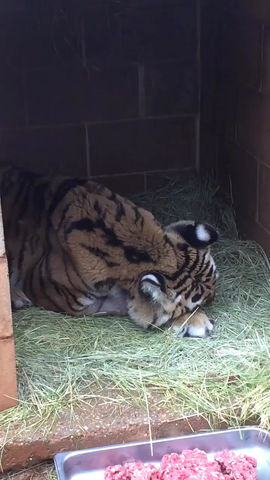 Tiger Creek Animal Sanctuary neglect - Lexie's story