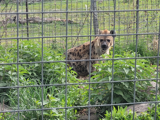 What should you do when you visit a roadside zoo?
