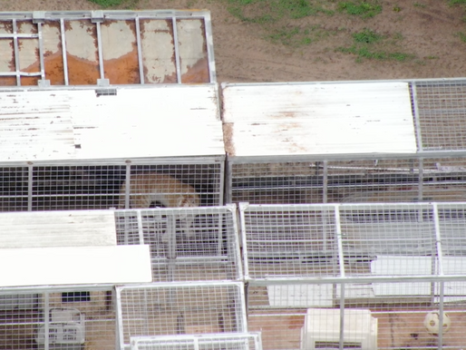 """Animal welfare group harassed by """"Lowe-lifes"""" at Tiger King Park while documenting animal neglect"""