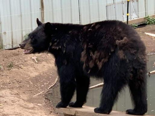 Adirondack Wildlife Refuge temporarily closes