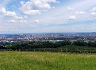 Bellevuewiese Meadow  - Vienna
