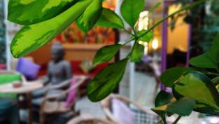 Caravane Cafe - Essaouira