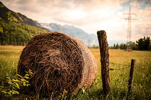 agriculture-country-countryside-518557.j