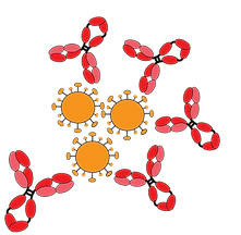 immune_recognition_of_viruses_2-01.png