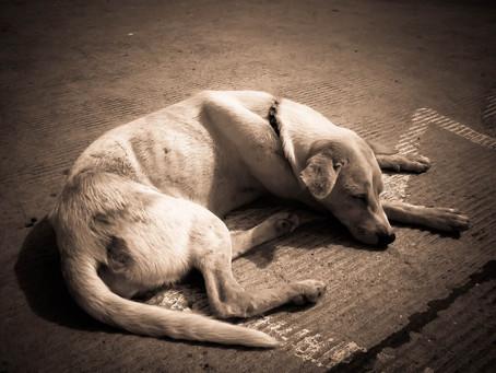 Máte doma hubeného psa, který nemůže přibrat?