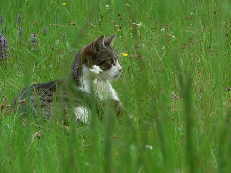 Citlivé trávení koček