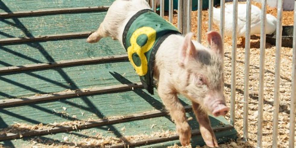 Richard's Racing Pigs and Ducks