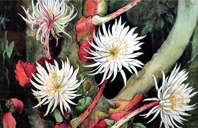 flor da lua.png