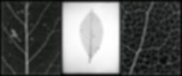 Leaf triptych 10x8 8x10 macro photography
