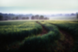 Late Mist farmland field countryside