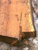 Log close-up.jpg