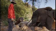 HUMANIMA : les éléphants du Laos