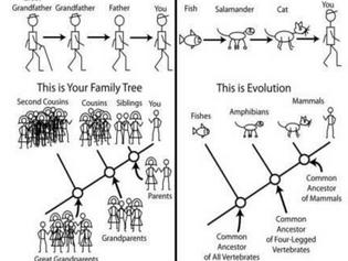 Moleküler Biyoloji ve Genetik seçmeli miyim?