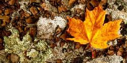 I do really love fall