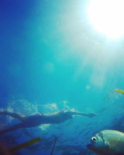 Fish traffic vs human traffic