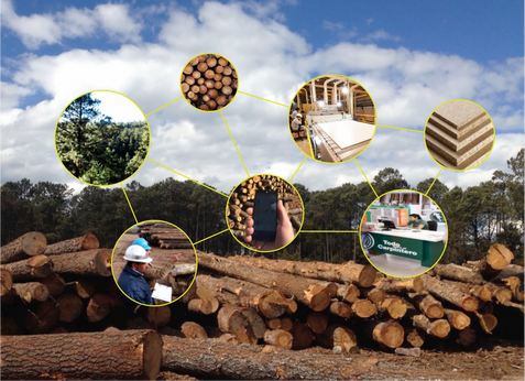 Securing and promoting the journey of sustainable wood