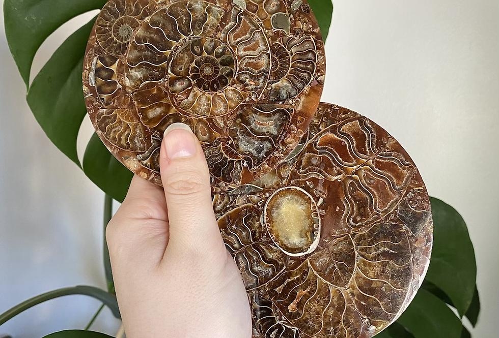 Ammonite Plate