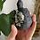 Thumbnail: Chrysanthemum Stone Turtle