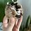 Thumbnail: Chocolate Calcite Sphere