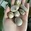 Thumbnail: Fossilized Coral Tumble