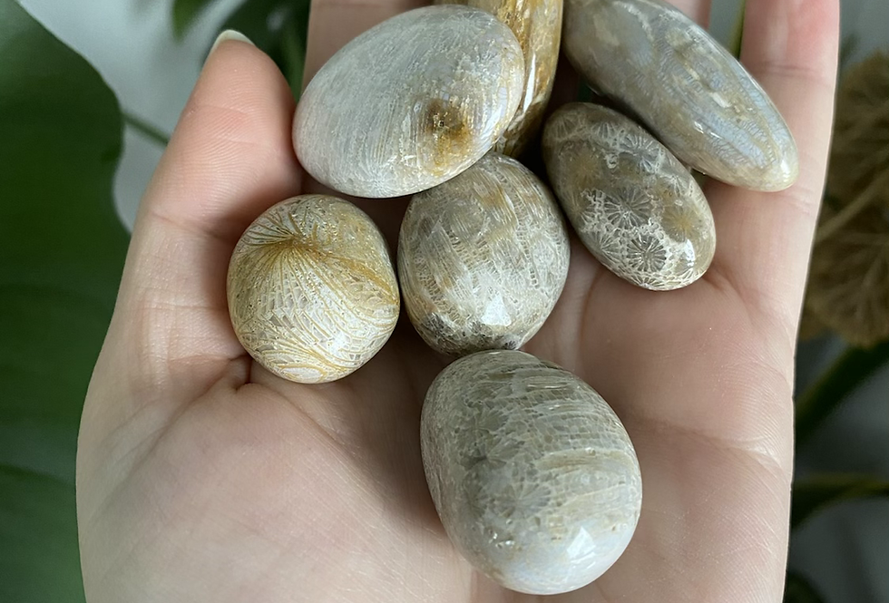 Fossilized Coral Tumble