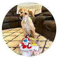 dog parties box
