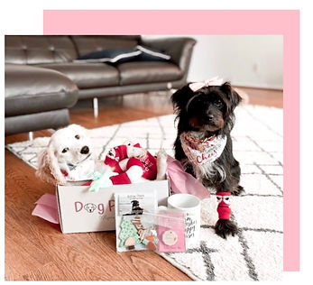 Dog Parties Box review