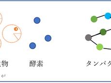微生物と酵素の関係