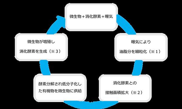 油脂分解の仕組み.png