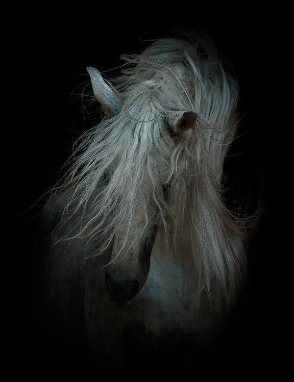white horse on black.jpg