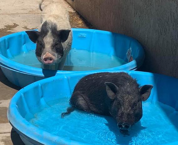 Piggie Smalls & Ruckus