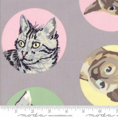 Kattenkopjes grijs