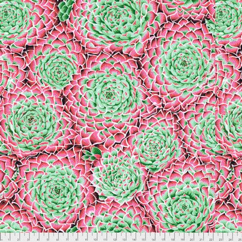 Succulent roze