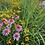Thumbnail: Pollinator Mix