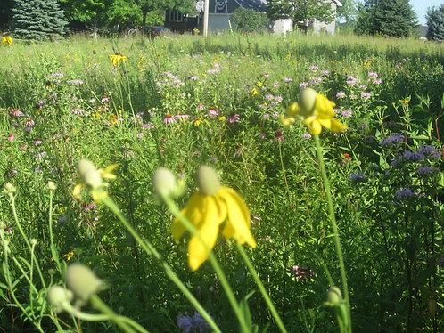 Native Tallgrass and Flower Prairie
