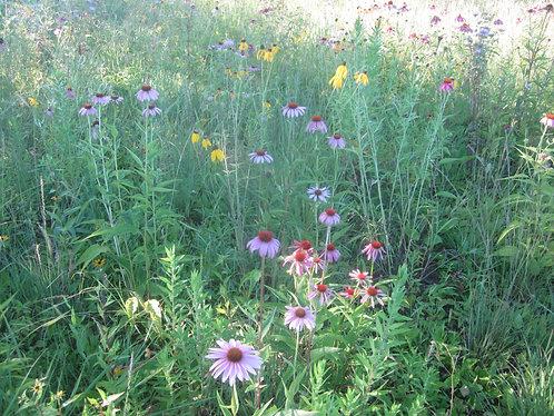 Native Pollinator Prairie
